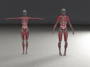 skeleton-1915470_1920